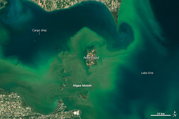 Algae Bloom in Lake Erie, acquired July 28, 2015.  © NASA Earth Observatory