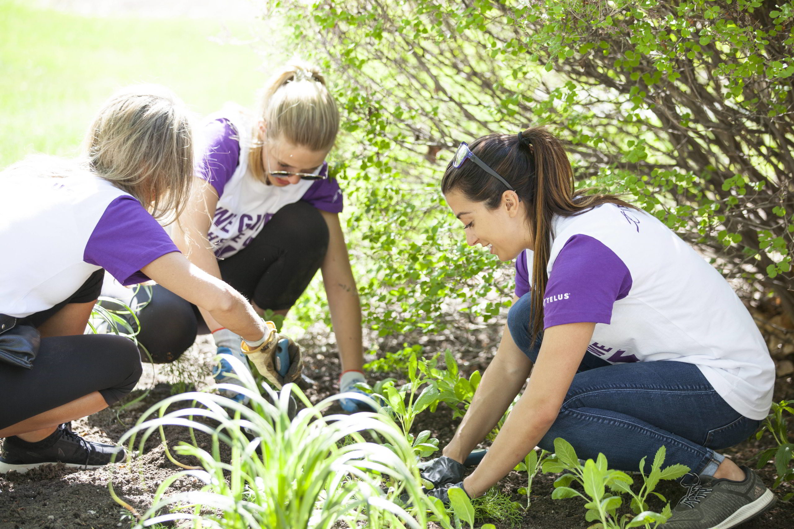 Telus employees at gardening at a partnered event