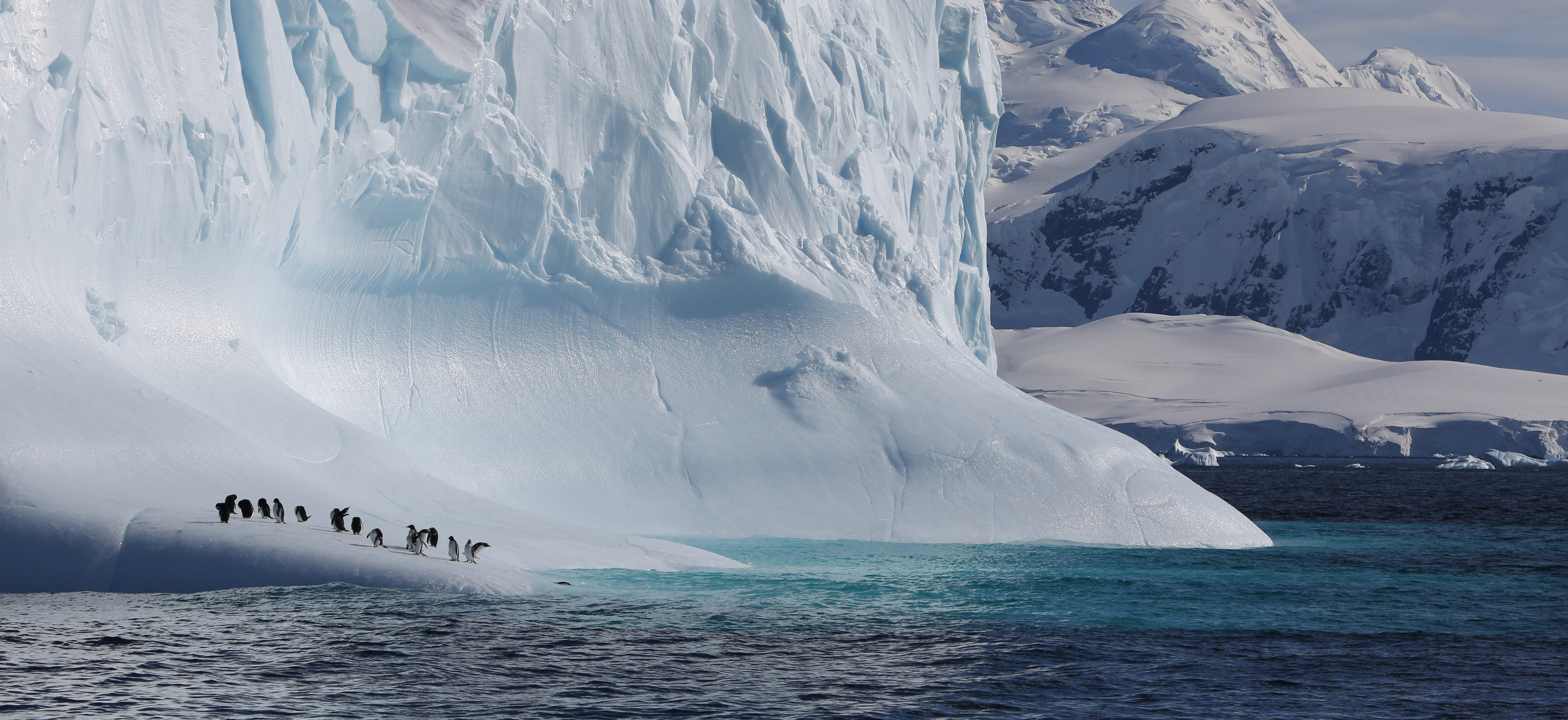 Gentoo penguins taking a rest from fishing on an iceberg in Antarctic Peninsula.