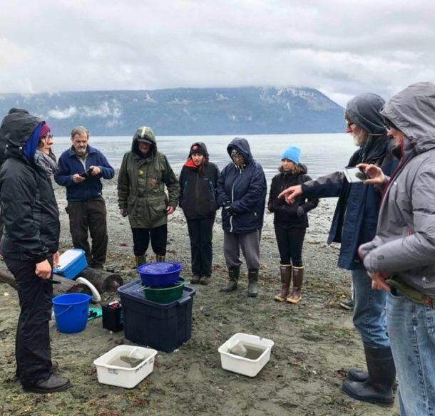 Suivi de l'habitat de fraie des poissons-proies dans la mer des Salish