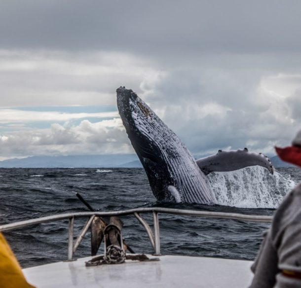 view of whale from boat