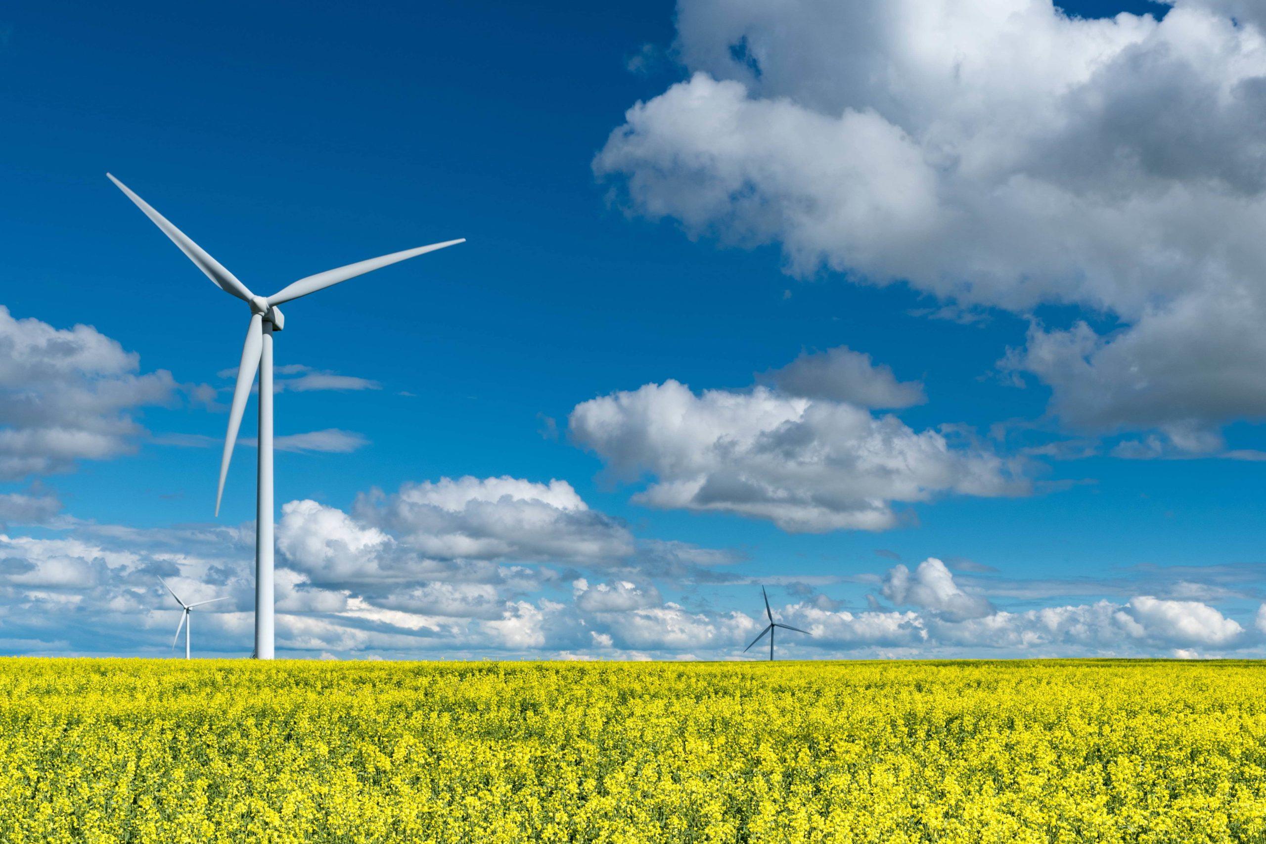 Image of windmill in field.
